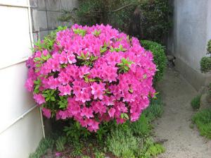 jitaku-hana-0807.jpg