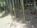 a-yasai-9866