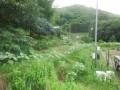 a-himawari-0743